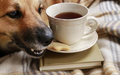 Les aliments dangereux pour votre chien